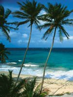 Barbados Holidays - The ultimate tropical paradise